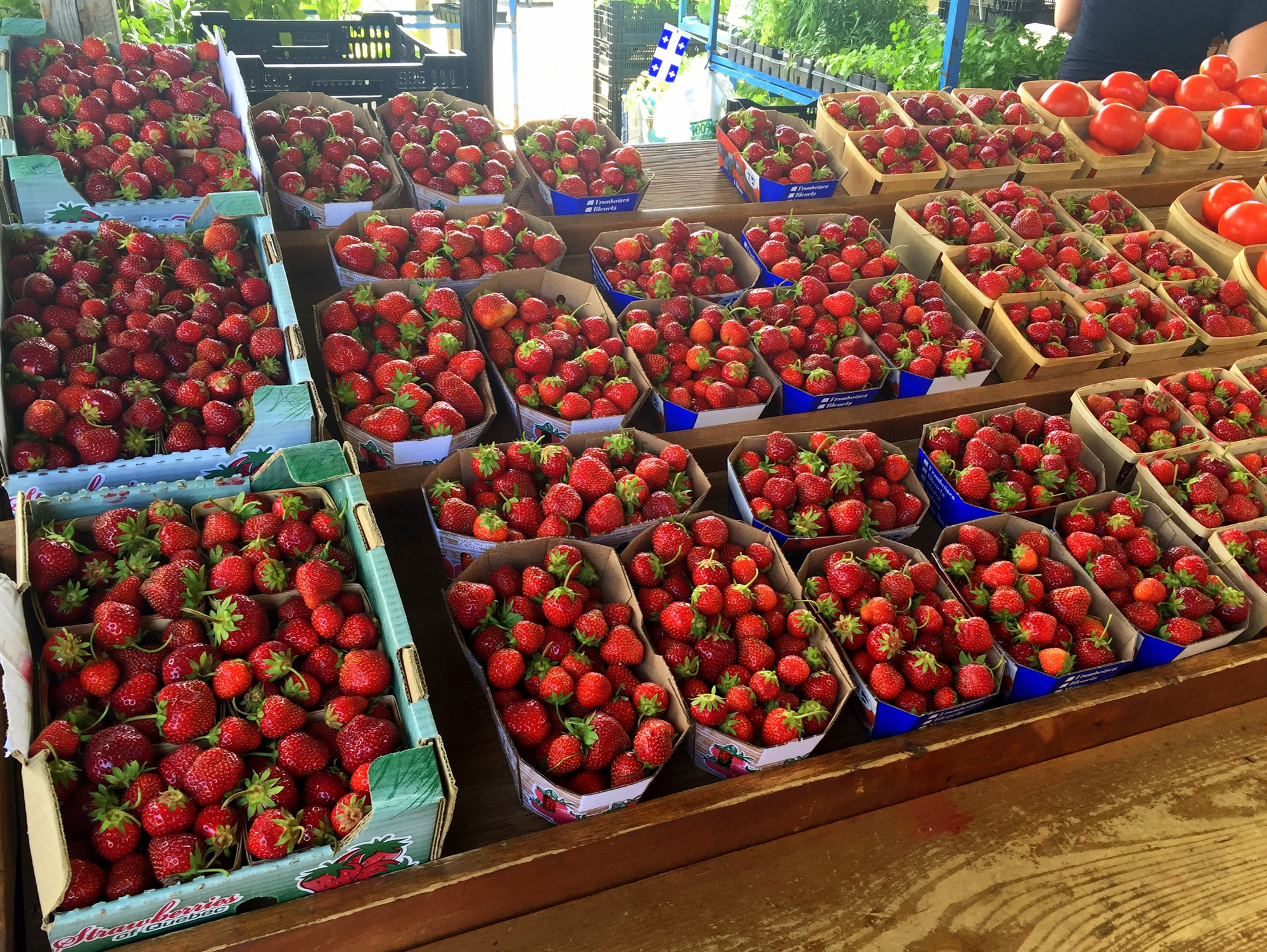 Strawberries Containers